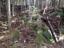 森林整備4