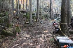 森林整備2